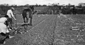 USA15PlantingStS50s.jpg