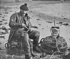 GM20LobsterCatch1903.jpg