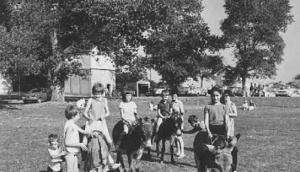 Image result for Lester Quenault's donkeys